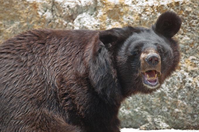 Bears, oh my...