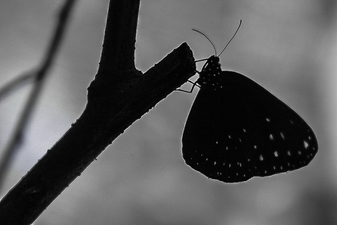 Butterfly, too