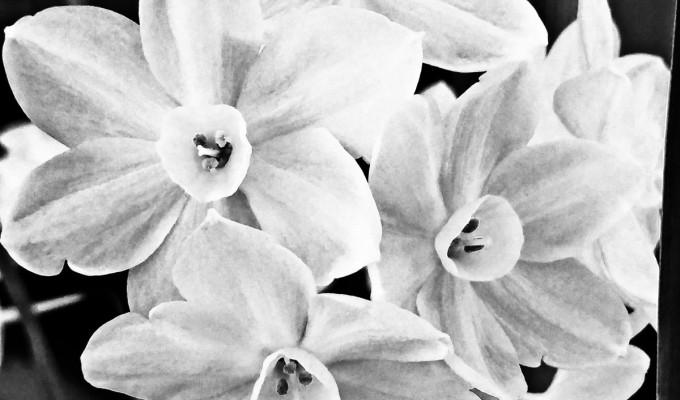 White Flowers…