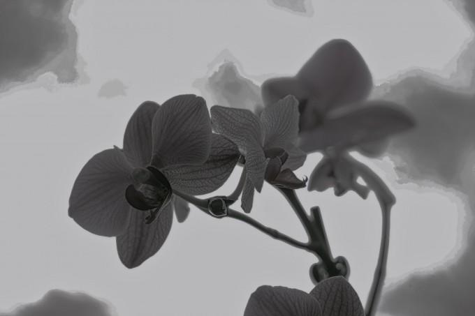 Kitchen Orchid B&W HDR Grunge