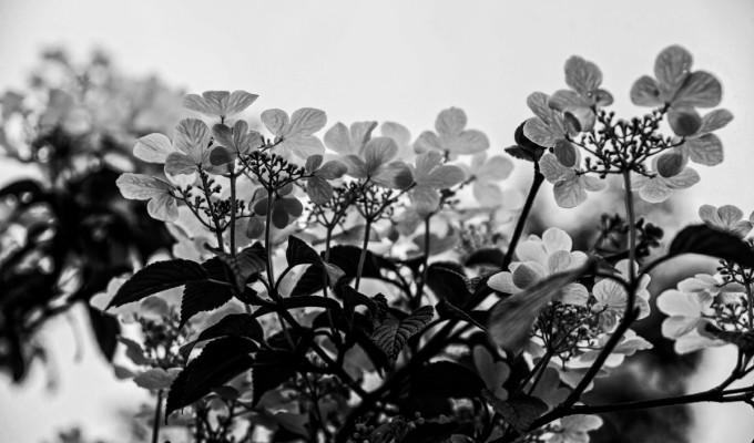 Spring blooms…