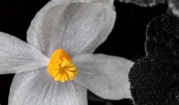 A lone blossom…