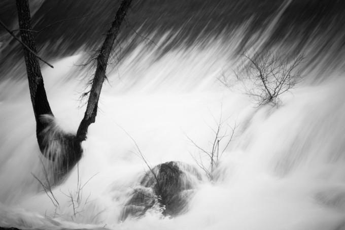 Water & Tree I