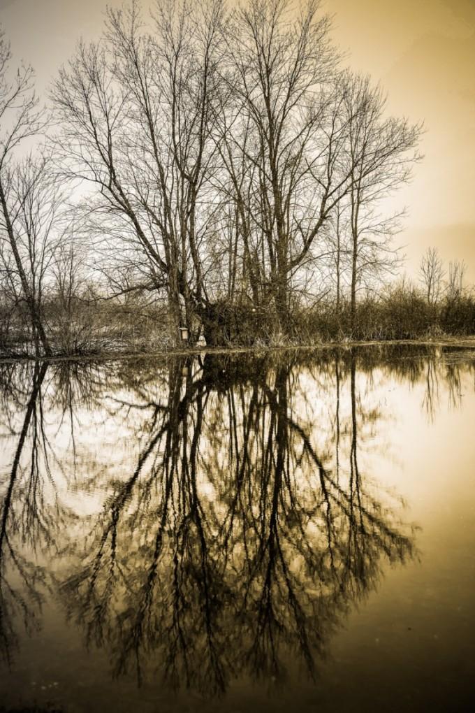 Lagoon I
