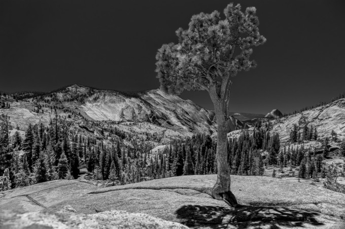 Yosemite Tree Light